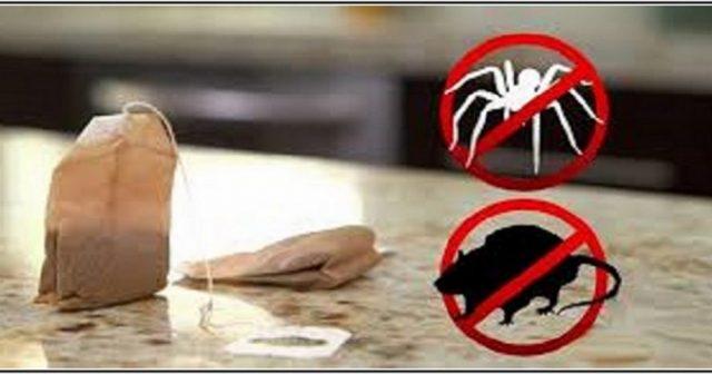 une astuce incroyable pour vous d barrasser des souris et. Black Bedroom Furniture Sets. Home Design Ideas