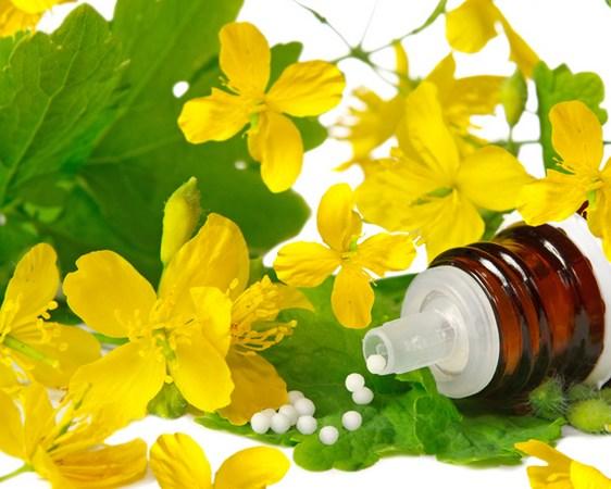 Comment utiliser lachélidoine en traitement des verrues