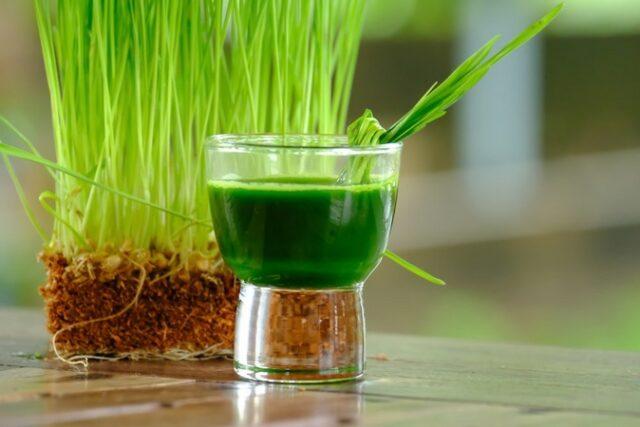 Jus d'herbe de blé : un soin de beauté qui ralentit le processus de vieillissement
